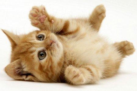 Кошки станут помощниками в лечении ВИЧ
