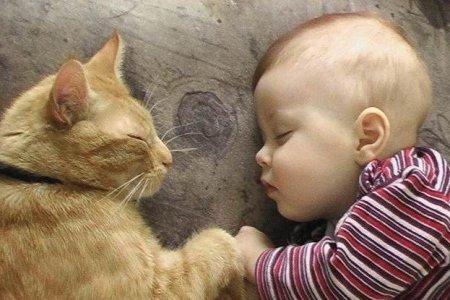 Животные помогут детям избавиться от астмы