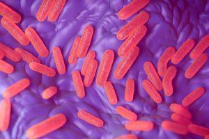 Новая вакцина от брюшного тифа признана эффективной и безопасной