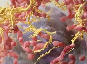 Ученые: иммунитет борется с вирусами при помощи клеток-«камикадзе»
