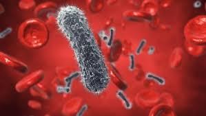 Пенициллин – самый надежный антибиотик?