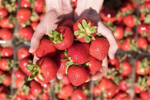 Если не помогают антибиотики, тогда спасет эта ягода