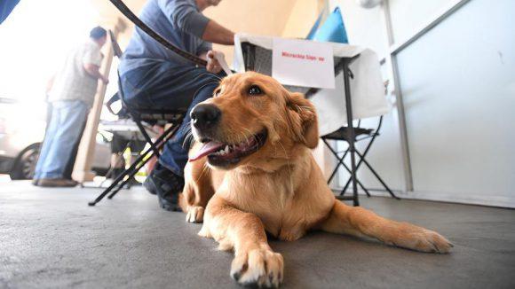 От собак можно заразиться смертельно опасной болезнью!