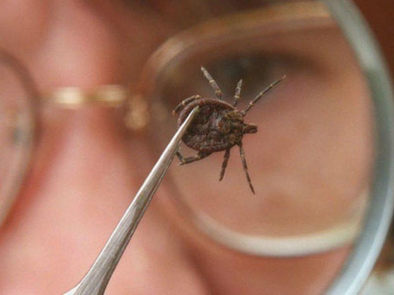 Ученые приблизились к возможности создать вакцину против болезни Лайма