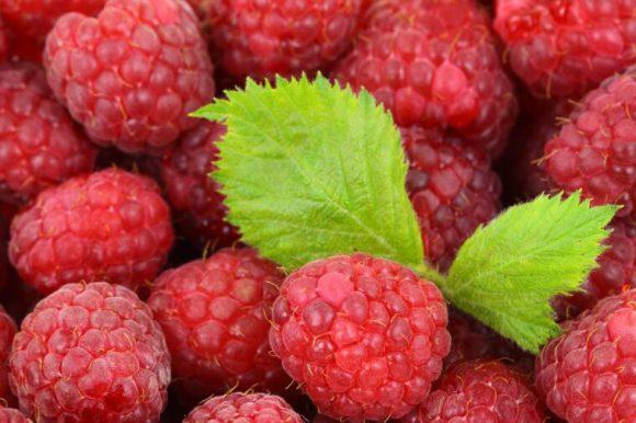 10 лучших продуктов для укрепления иммунитета
