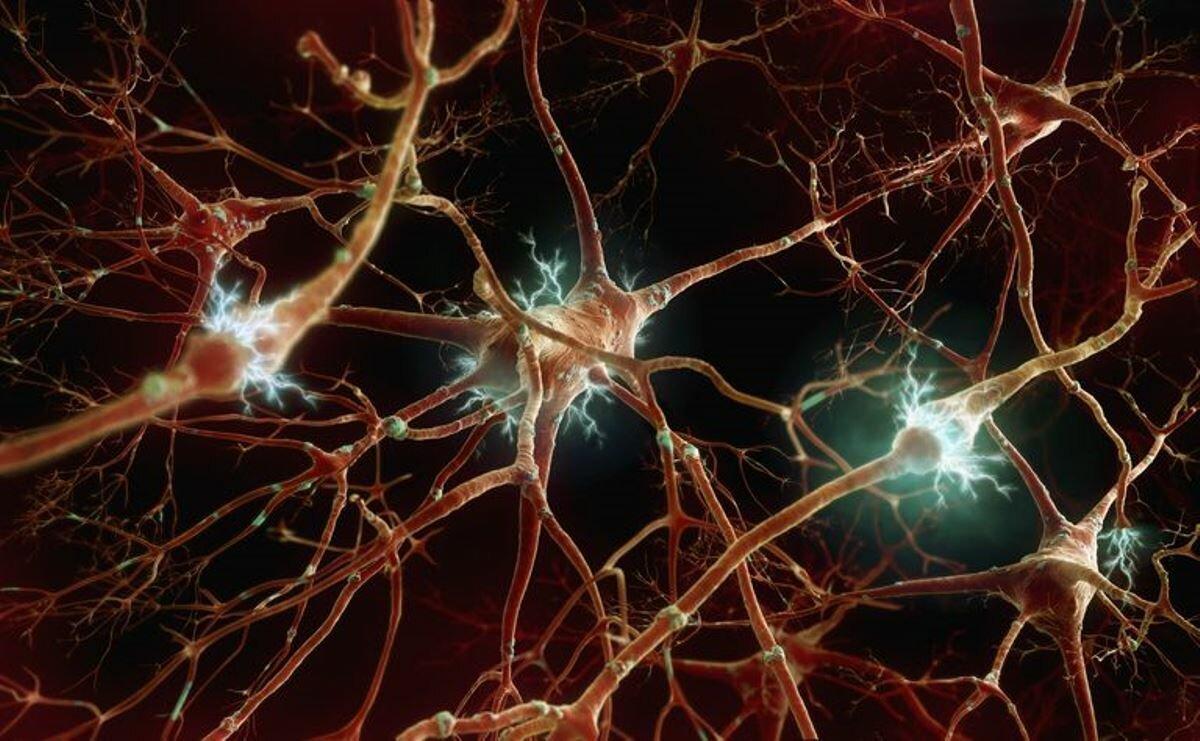 Коронавирус поражает всю нервную систему человека