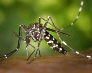 Обнаружен новый противовирусный механизм для лечения лихорадки денге