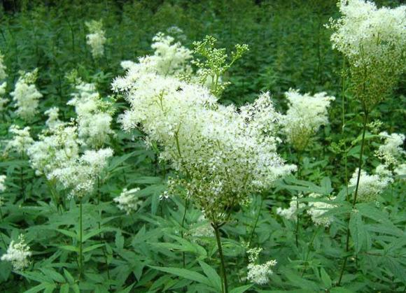 Названы травы, особо эффективные в сезон простуды и гриппа