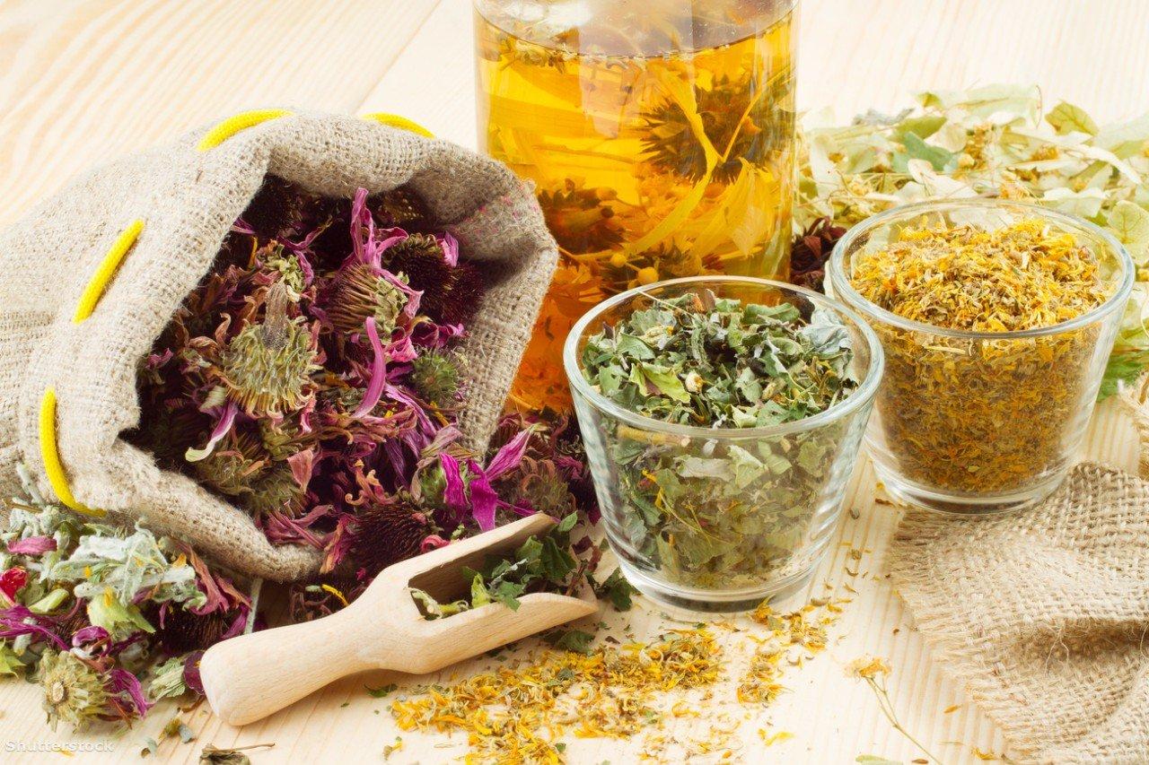 Лечебные травы в лечении цистита