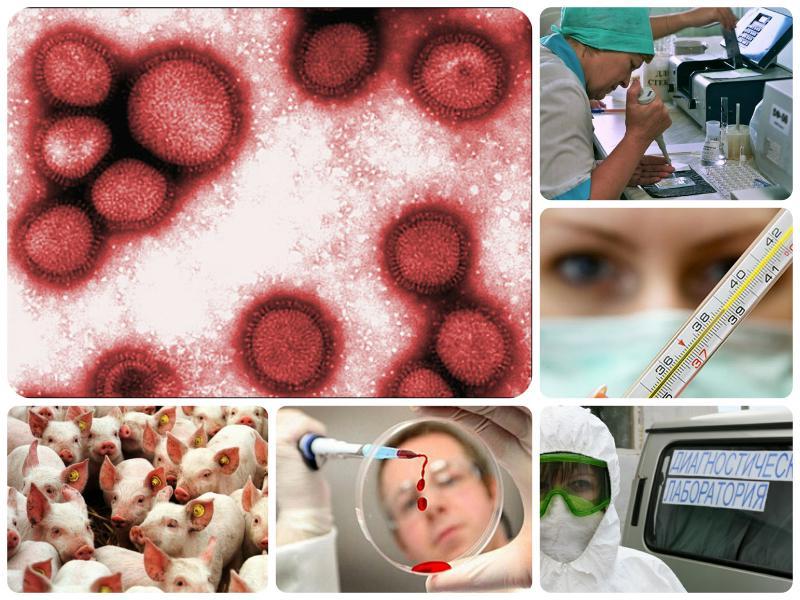 Как лечиться от свиного гриппа
