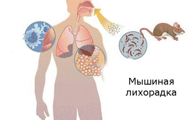 Мышиная лихорадка
