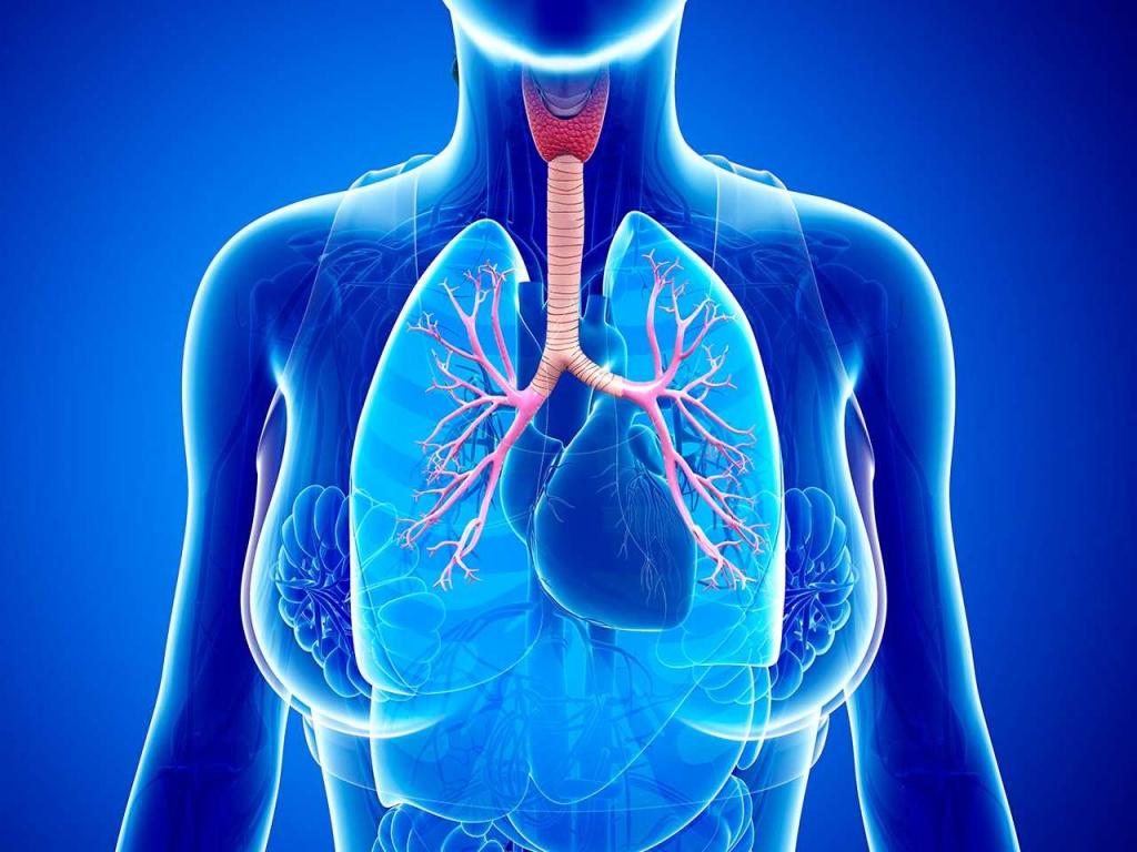 Бронхиальная астма: причины, симптомы и методы лечения